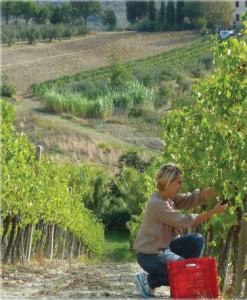Paola_Pavan_Personal_Wine_Shopper_Fields