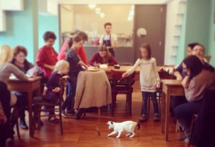 crazy_cat_cafe