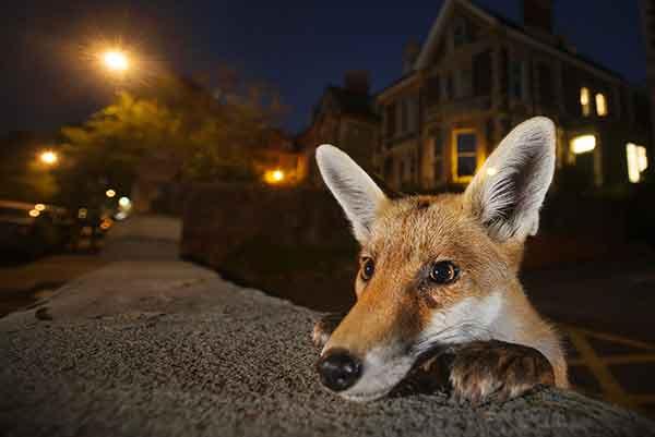 wildlife_photographer_year_2017