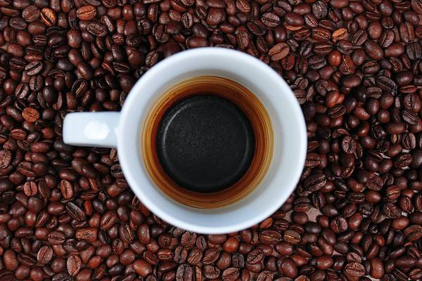 COFFEE GROUNDS WHERE