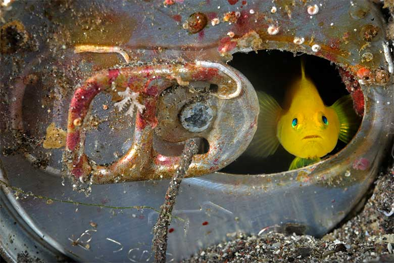 Understanding the climate change(c) Brian J. Skerry